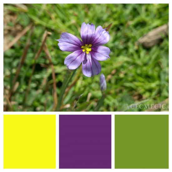 nature_palette01