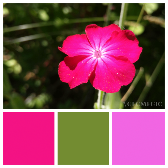 nature_palette04